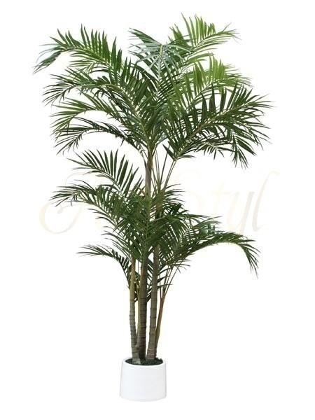 palma-bambusowa